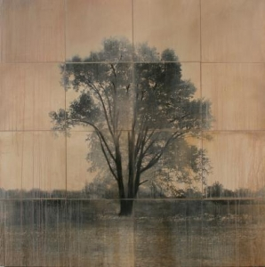 carmel-tree-john-folsom