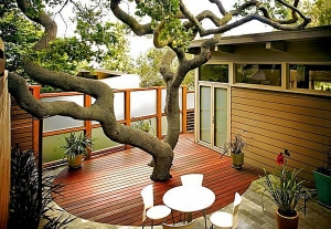 deck-with-tree