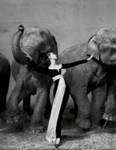 richard_avedon_dovima_with_elephants_evening_dress_by_dior_cirque_dhiv_d5379338h