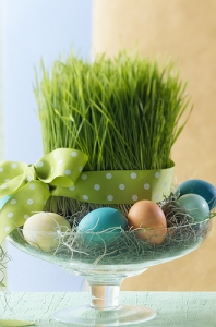 wheat-grass-easter